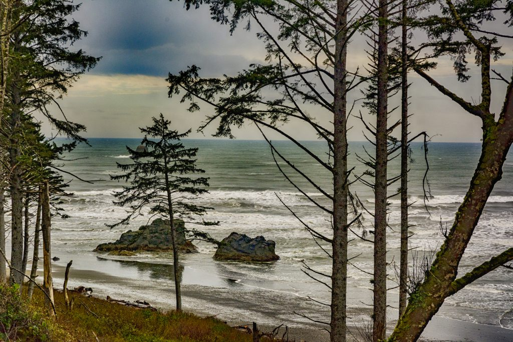 A view of the Pacific Ocean through the trees at the Ruby Beach Parking Lot, Olympic National Park.