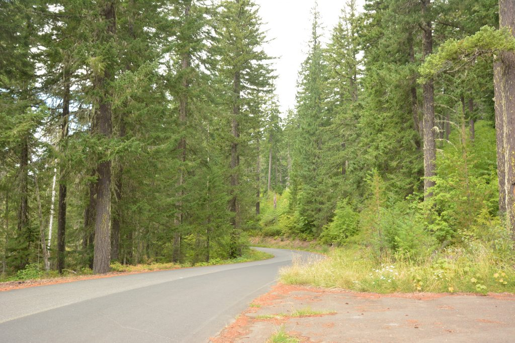 A road leading north into the Skamania County interior, narrow and winding through heavy forest