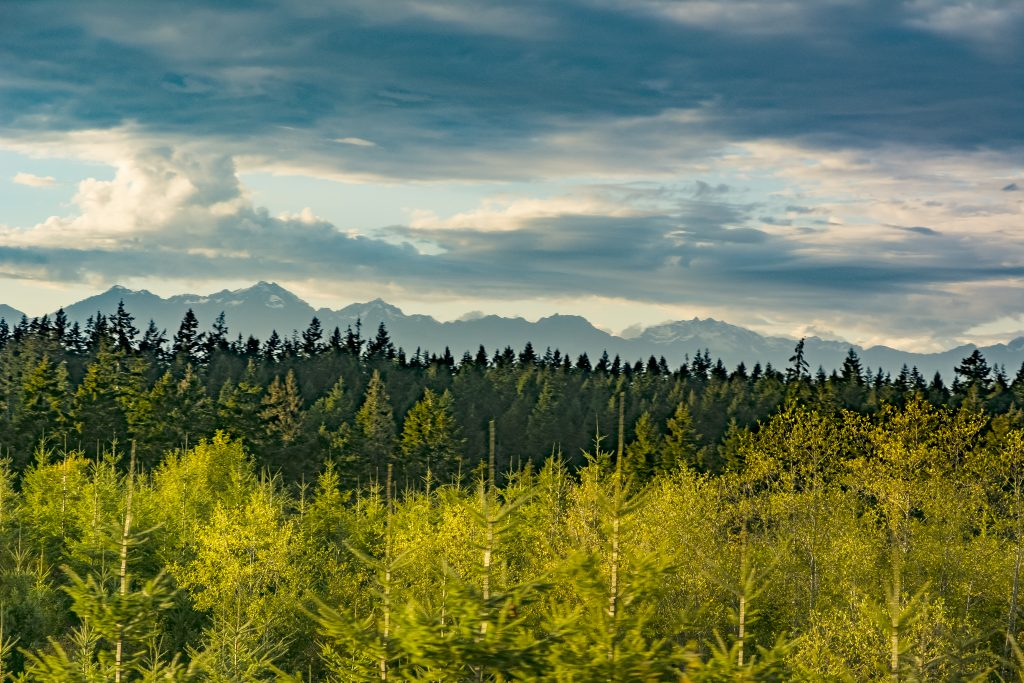 A view of the mountains of Olympic National Park as seen from Washington Highway 3 near Grapeview.