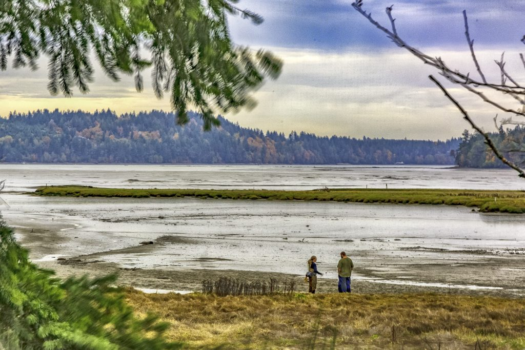 Oyster Bay Estuary on the southern end of Puget Sound.