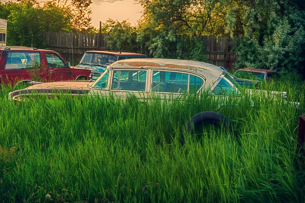 a 1956 Ambassador lost in the weeds