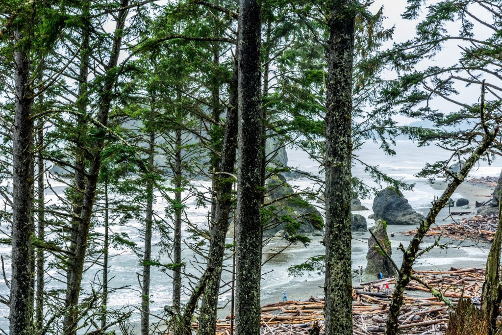 A view through the trees of Ruby Beach from the parking lot--driving across Jefferson County