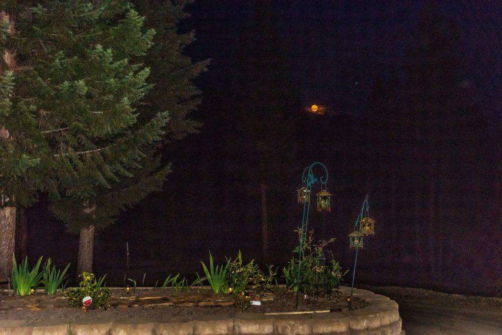 Night shot of flower bed with full moon rising above.  Happy Days Are Here Again!