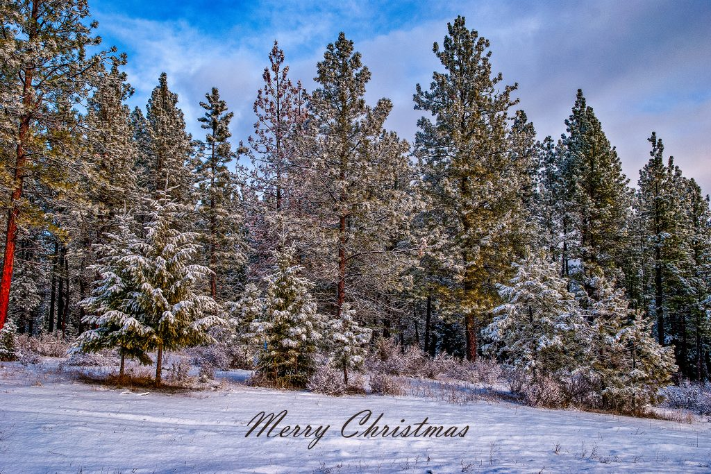The View from our front door.   Photography from the fourth week in December.  Wishing you a Merry Christmas.  Link takes you to my RedBubble sales gallery.